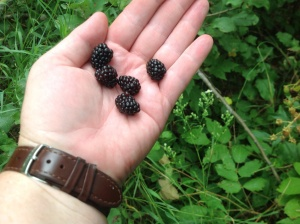 Blackberries are more oblong shaped