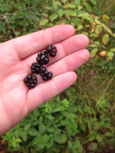 Dewberries are smaller.